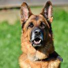 Freilaufende Hunde: Stadtverwaltung Mainz umgeht Amtspflicht mit Aufruf zu Zivilcourage