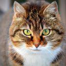 Katzen - Serienkiller in der Natur